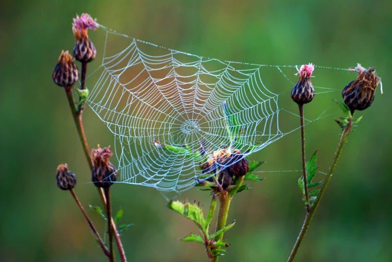 Web der Spinne stockfotografie