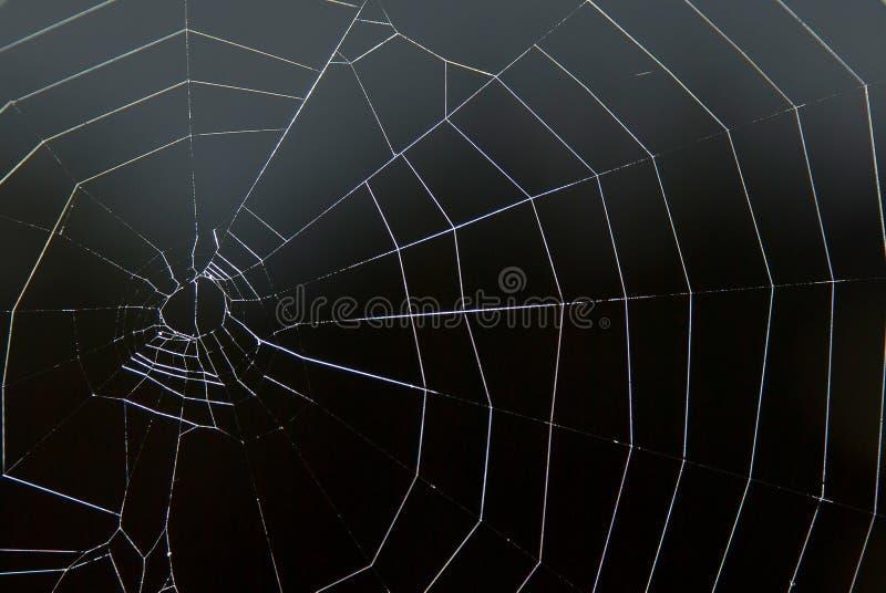 Web der Spinne auf Schwarzem lizenzfreie stockfotografie