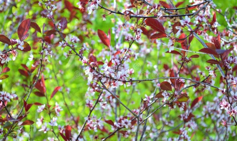Web des fleurs image stock