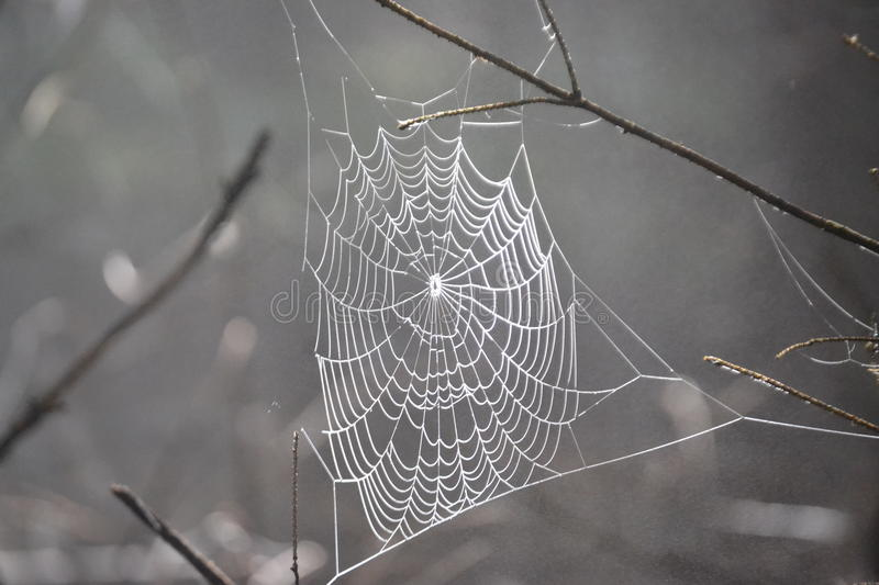 Web, detail. Detail cobwebs in the forest. Autumn photos stock images
