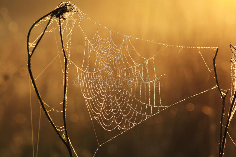 Download Web in dew stock photo. Image of internet, circle, dawn - 15772258