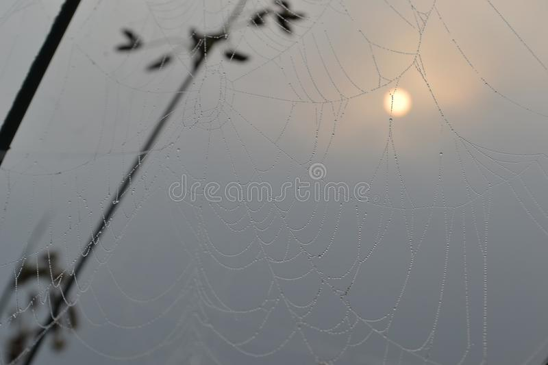 Web in dew on a background of the rising sun stock image
