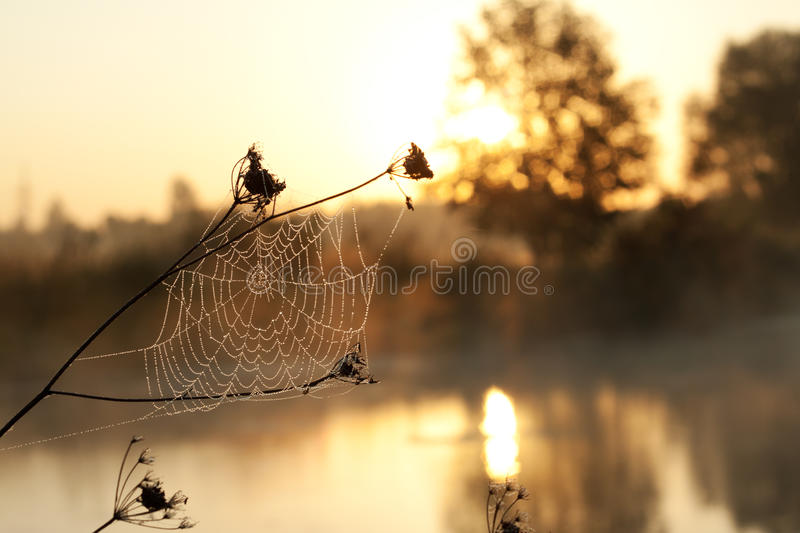 Download Web with dew drops stock photo. Image of tranquil, brightly - 26851424