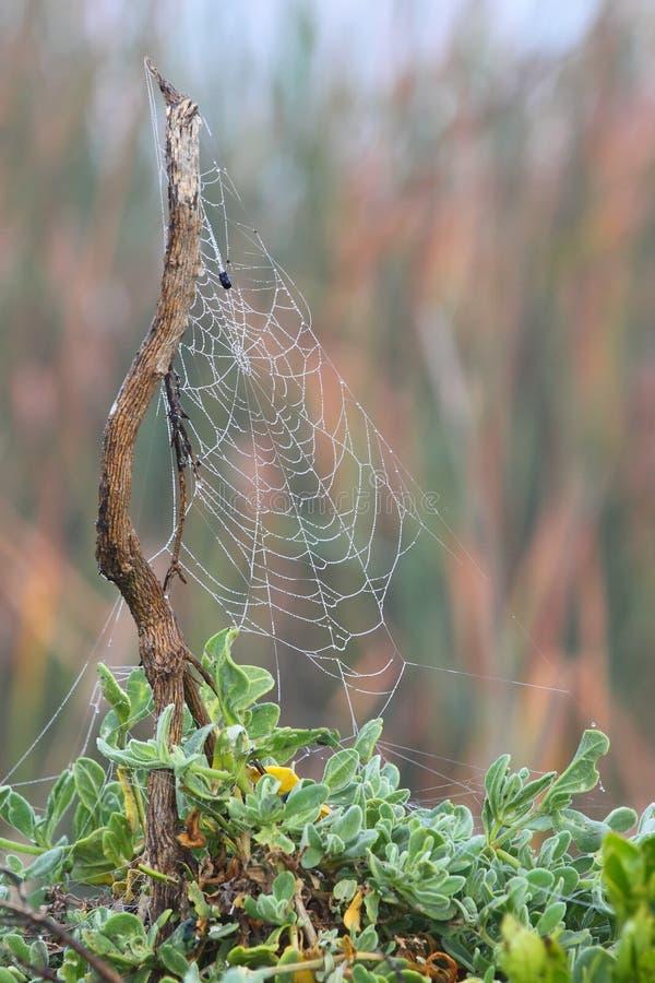 Web di ragni fotografia stock