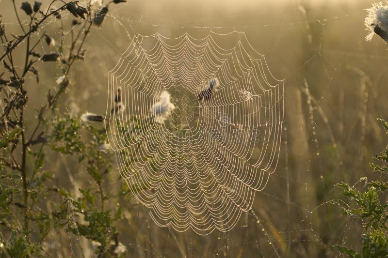 Web di ragni fotografia stock libera da diritti