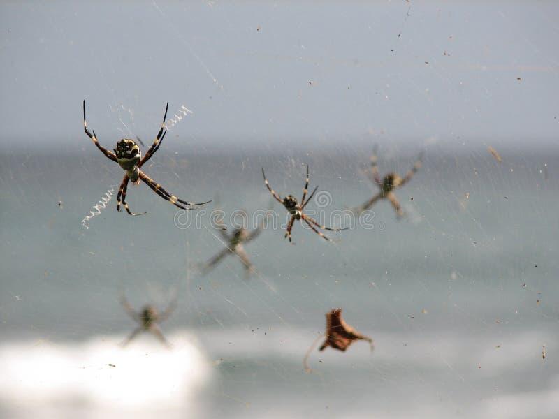 Web di ragni immagine stock
