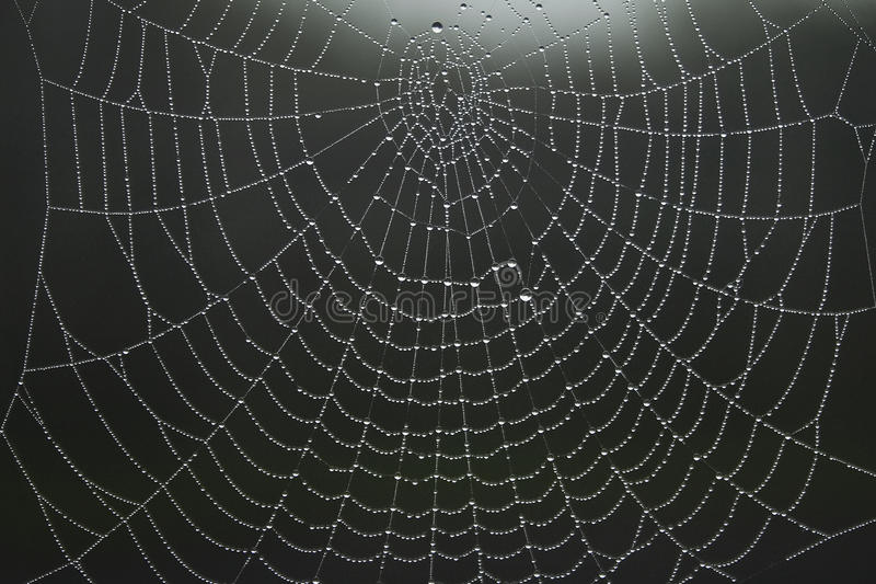 Web di ragni immagini stock libere da diritti