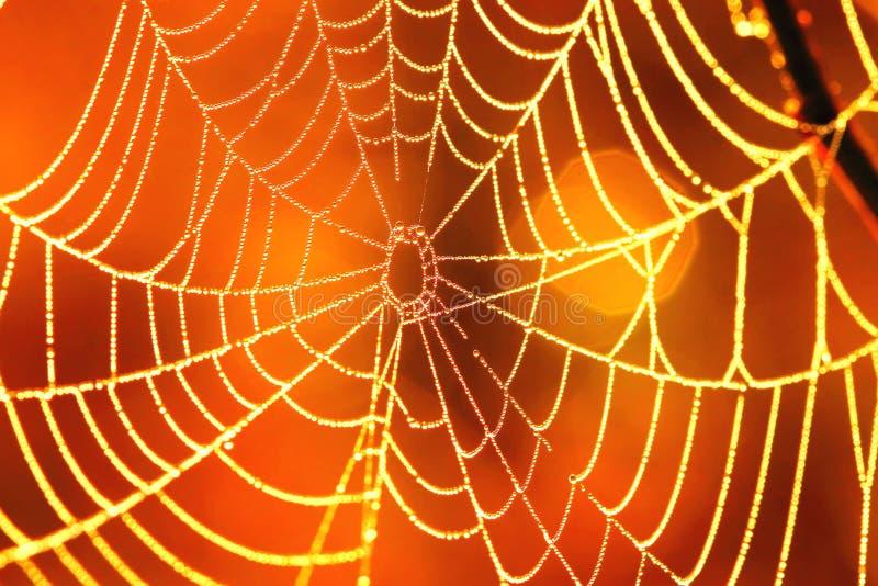 Web di ragni B fotografia stock