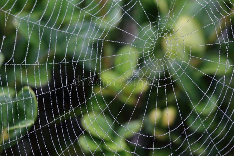 Web di ragno bagnato immagine stock libera da diritti