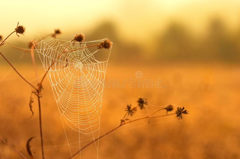 Web di ragno bianco fotografie stock