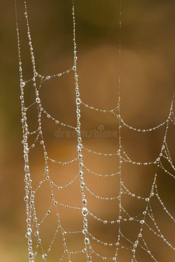 Web di ragno con le gocce dell'acqua fotografie stock libere da diritti