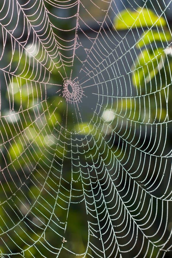 Web di ragno nell'ambito di luce solare fotografia stock libera da diritti