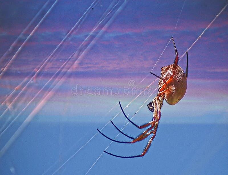Web di tessitura del ragno del globo fotografie stock libere da diritti