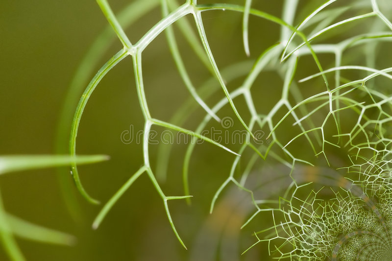 Web Dreams Stock Photography
