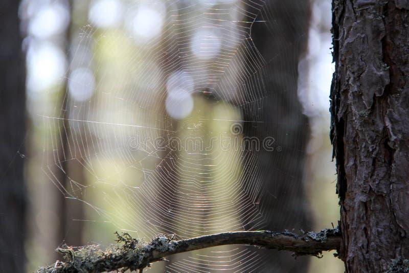 Web e close-up da aranha na luz solar no fundo borrado da floresta imagens de stock
