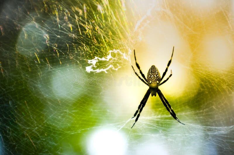 Web en spin op een kleurrijke hemel royalty-vrije stock fotografie