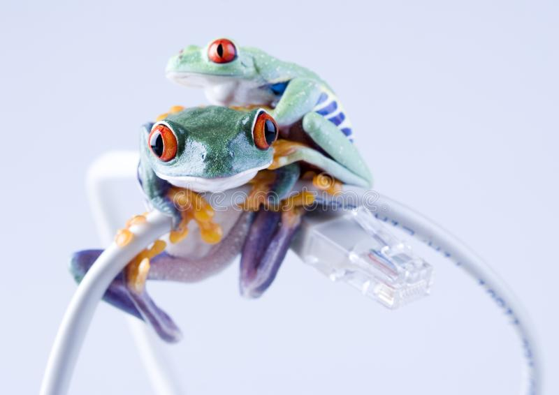 Web frog stock photography
