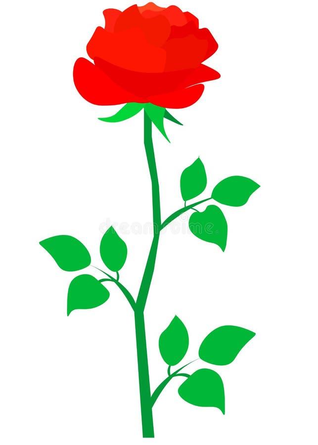 web Grand bourgeon d'isolement de vecteur de rose rouge fra?che avec des feuilles sur le fond blanc illustration de vecteur