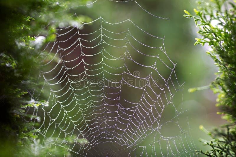 Web humide de ` d'araignée image stock