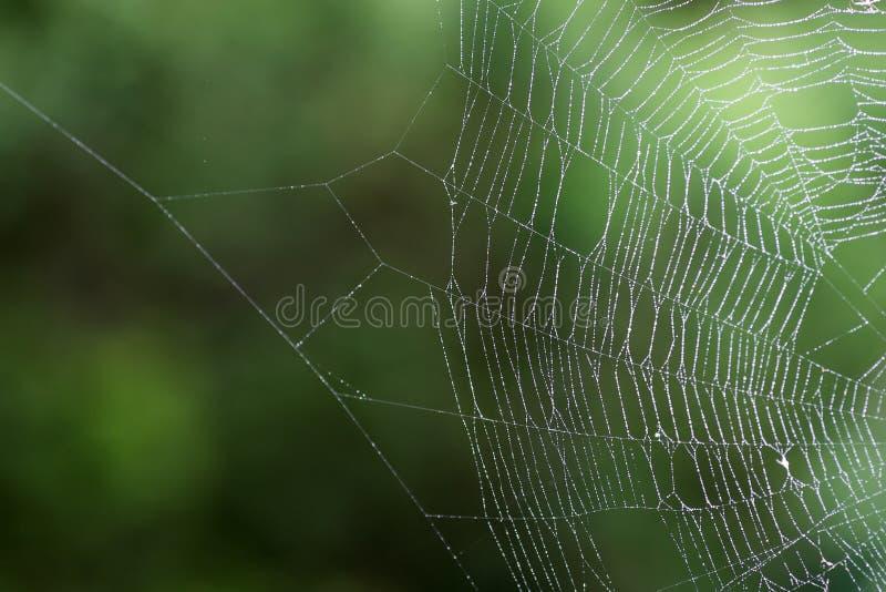 Web humide de ` d'araignée images libres de droits