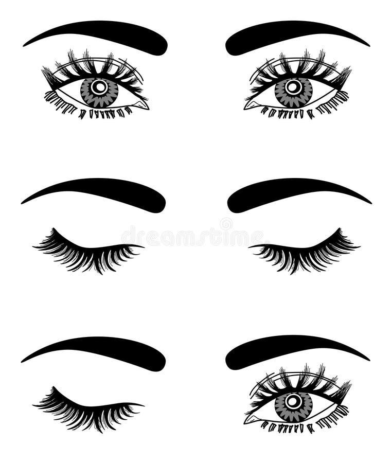 web Illustrazione dell'occhio lussuoso sexy della donna con le sopracciglia perfettamente a forma di e le sferze complete Idea di illustrazione vettoriale