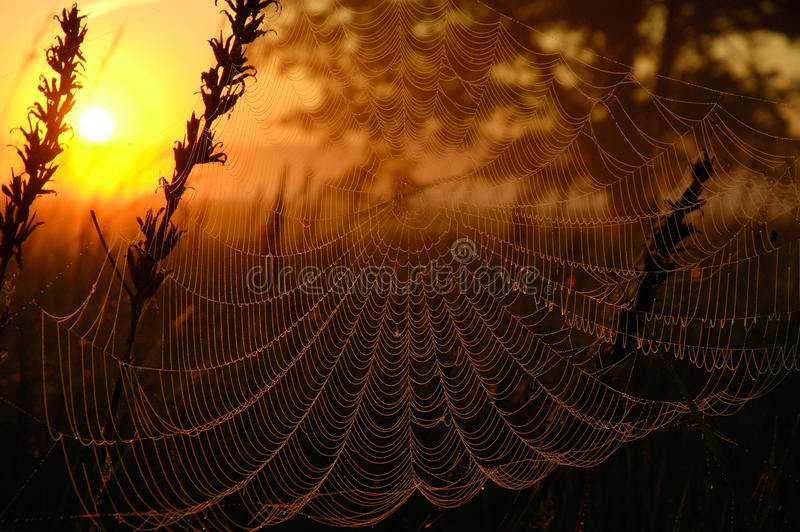 Web in the light of the rising sun. Poland.Meadows near Bug river in summer.Web in the red light of the rising sun royalty free stock photo