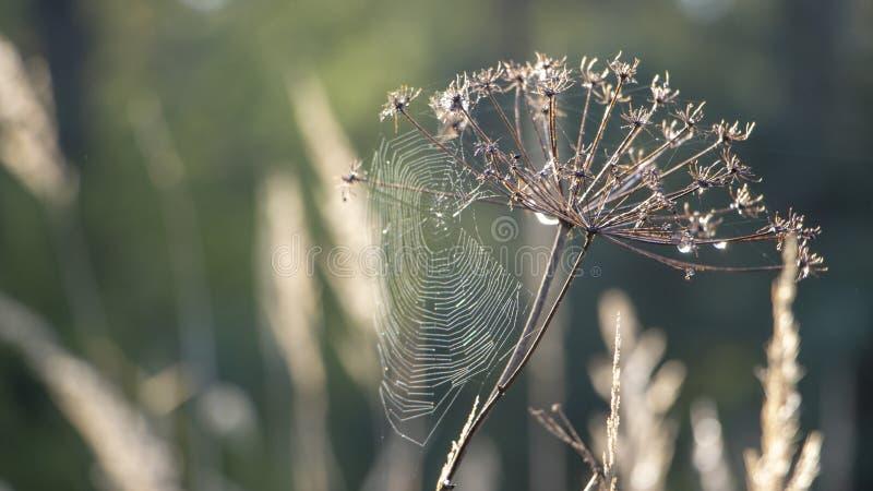 Web met dauwdalingen op een grassprietje op een Mistachtergrond royalty-vrije stock fotografie
