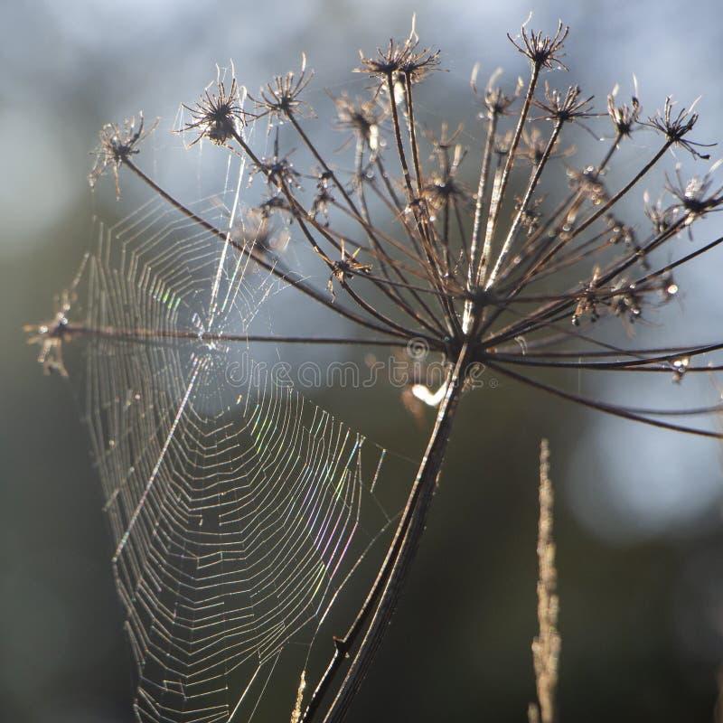 Web met dauwdalingen op een grassprietje op een Mistachtergrond royalty-vrije stock foto's