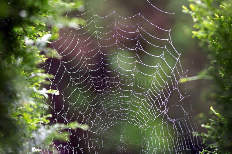 Web mojado del ` de la araña fotos de archivo libres de regalías
