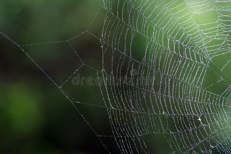 Web mojado del ` de la araña imagen de archivo