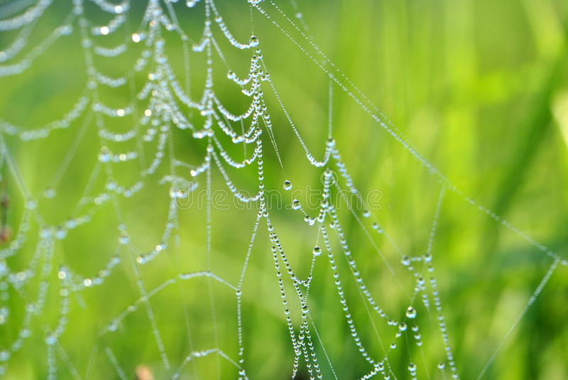 A web in the morning. A web covered with morning dew royalty free stock images