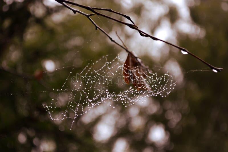 Web op de takken in de dauw van een nevelig bos royalty-vrije stock foto