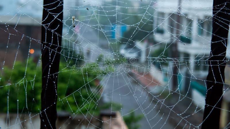 Web ou teia de aranha de aranha com gotas de orvalho do amanhecer foto de stock