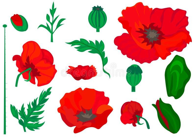 web pavot Belles fleurs réalistes lumineuses de couleur rouge sur un fond blanc Illustration de vecteur illustration libre de droits