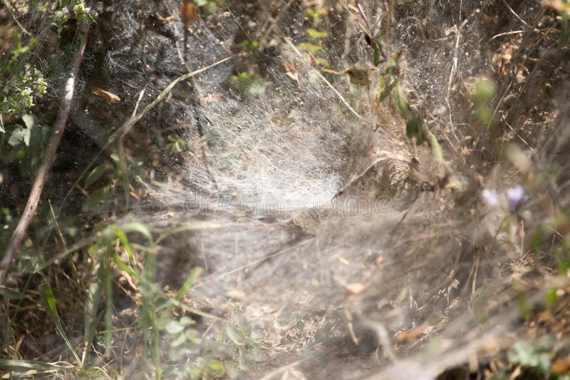 Web on the plant in nature stock photo