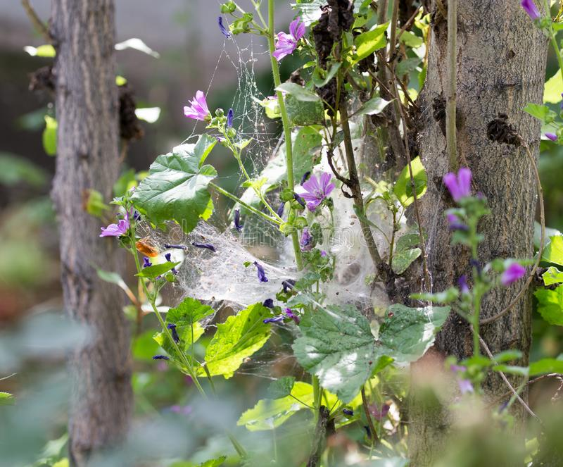 Web on the plant in nature stock images