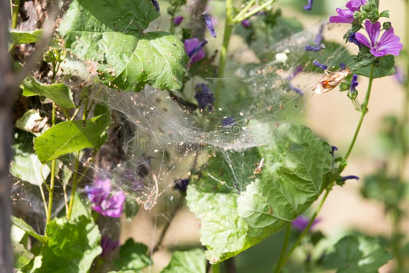 Web on the plant in nature royalty free stock photos