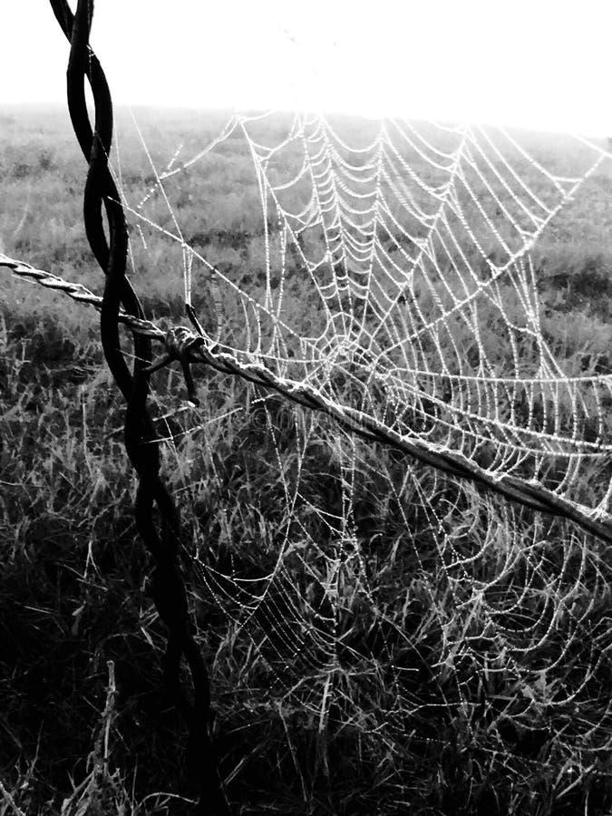 Web scuro immagine stock