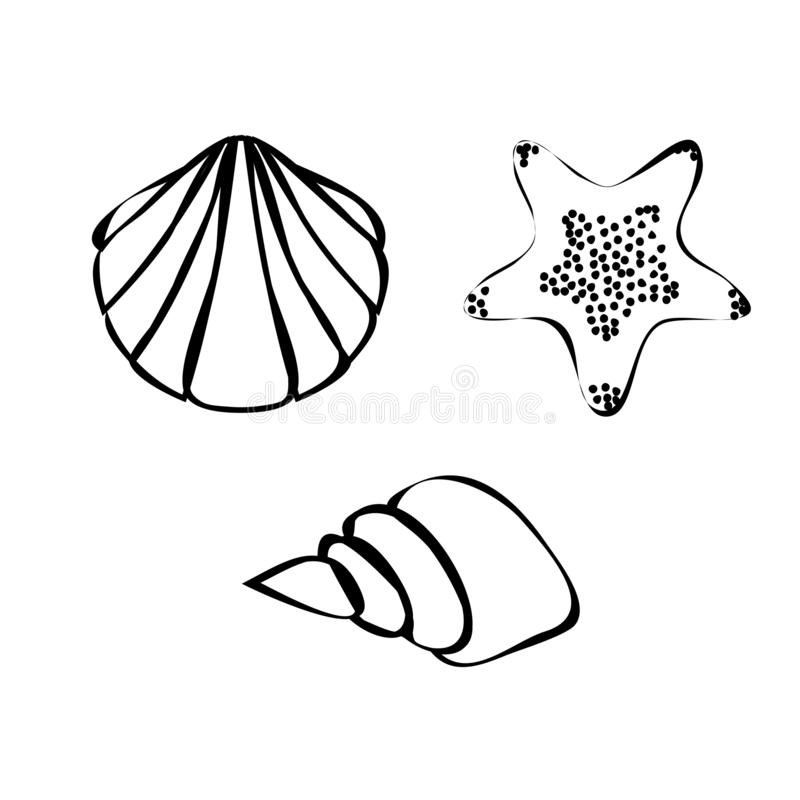 Set of shell, conch and starfish outline vector. Illustration isolated on white background royalty free illustration