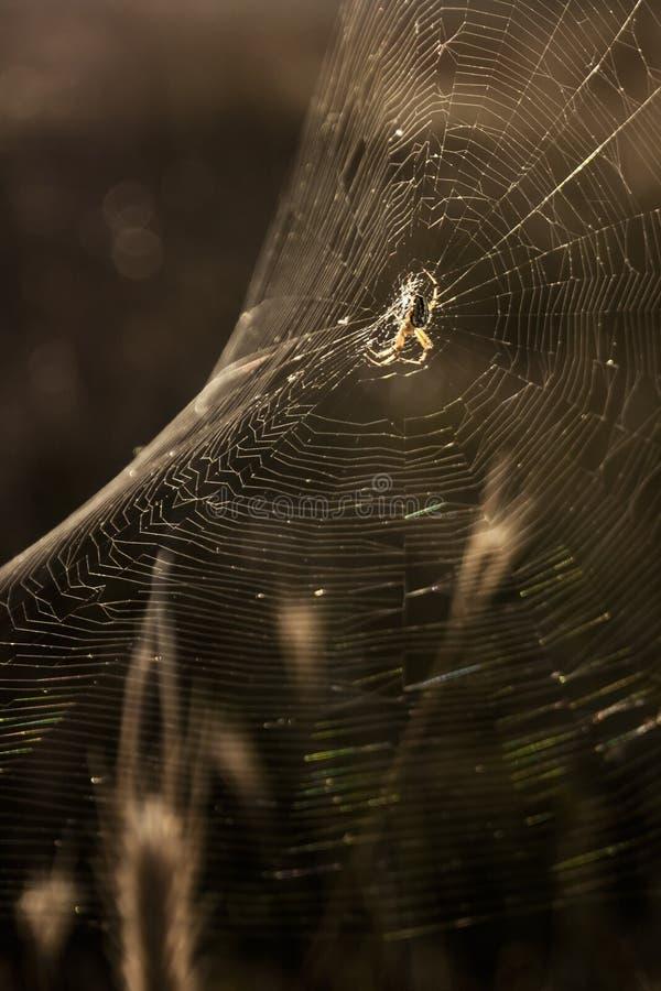Web spider fotografie stock libere da diritti