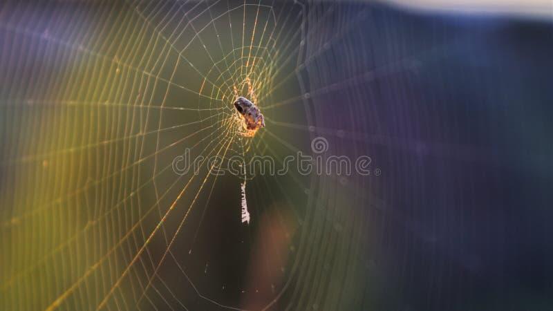 Web spider photos stock