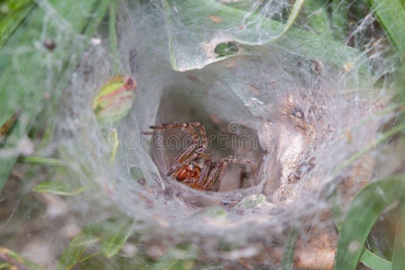 Web spider nel web immagini stock