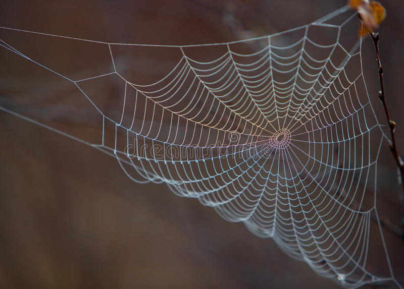 Web. A spiders web covered in dew stock images