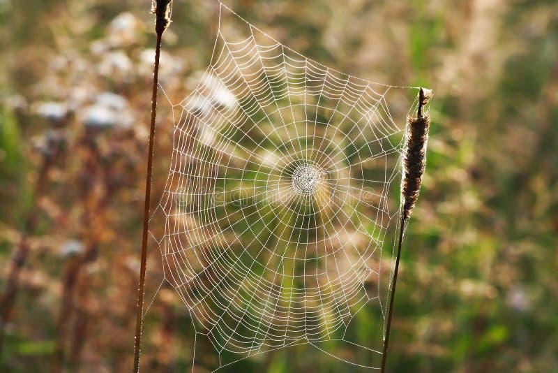 A Web teceu por uma aranha no formulário de uma espiral em um prado do verão imagens de stock