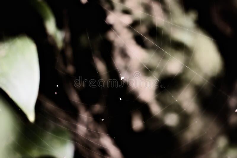 Web torcidas para atrapar la presa para la araña fotos de archivo libres de regalías