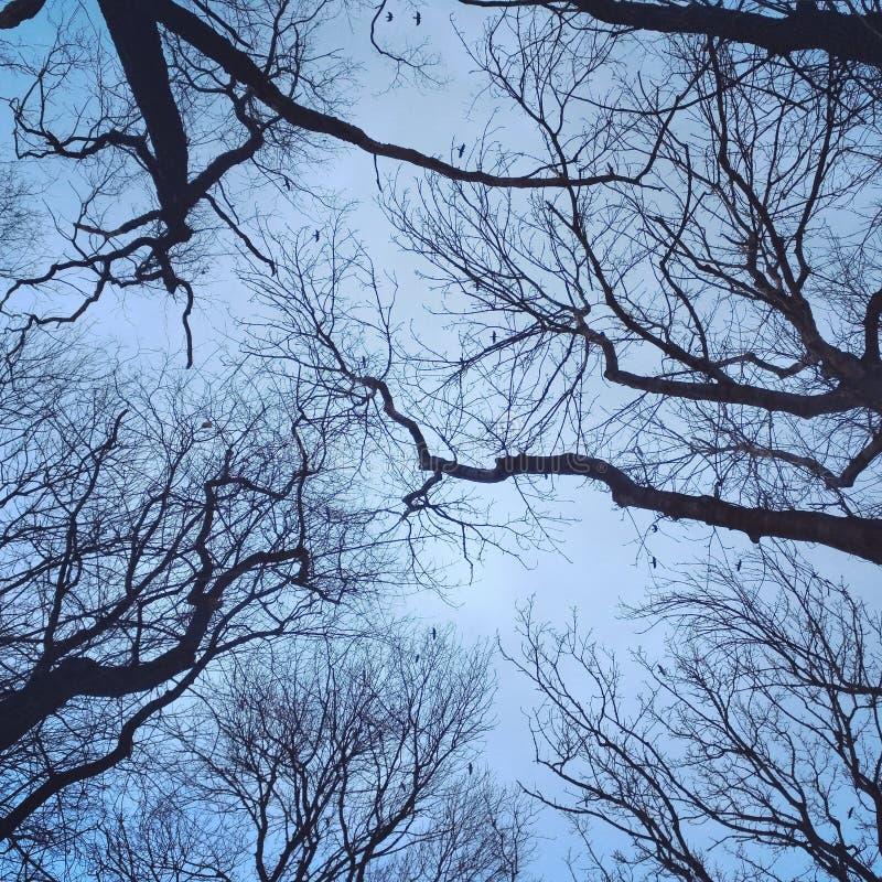 Web van bomen royalty-vrije stock foto's