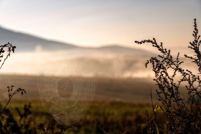 Web van een spin tegen zonsopgang royalty-vrije stock afbeelding