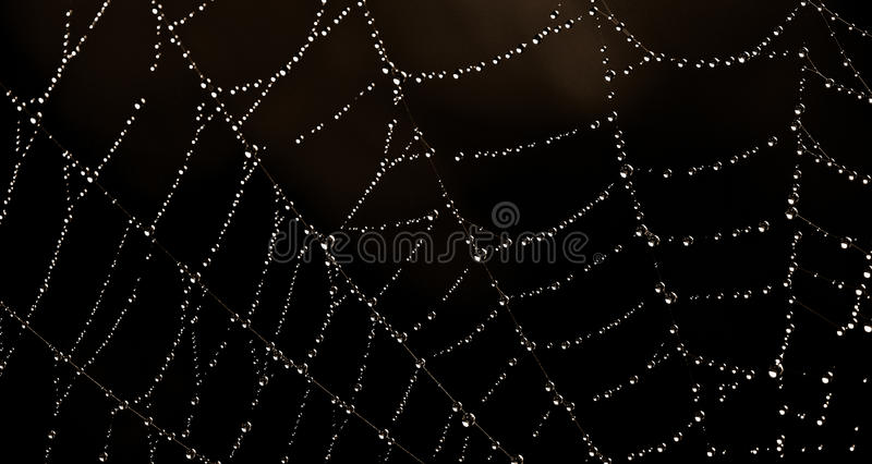 Web with water drops stock image