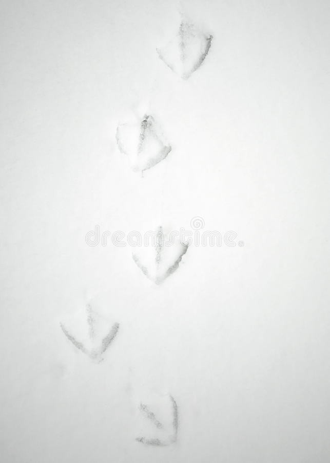 Webbed Footprints in Snow royalty free stock image