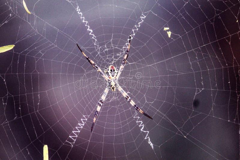 Webby del hombre araña imagen de archivo libre de regalías